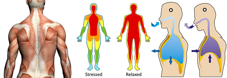 Biofeedback Therapy in Washington DC and Maryland by Naturopathic Doctor Randy Gastwirt.